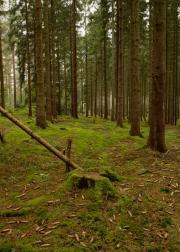 Mosgrond in het bos