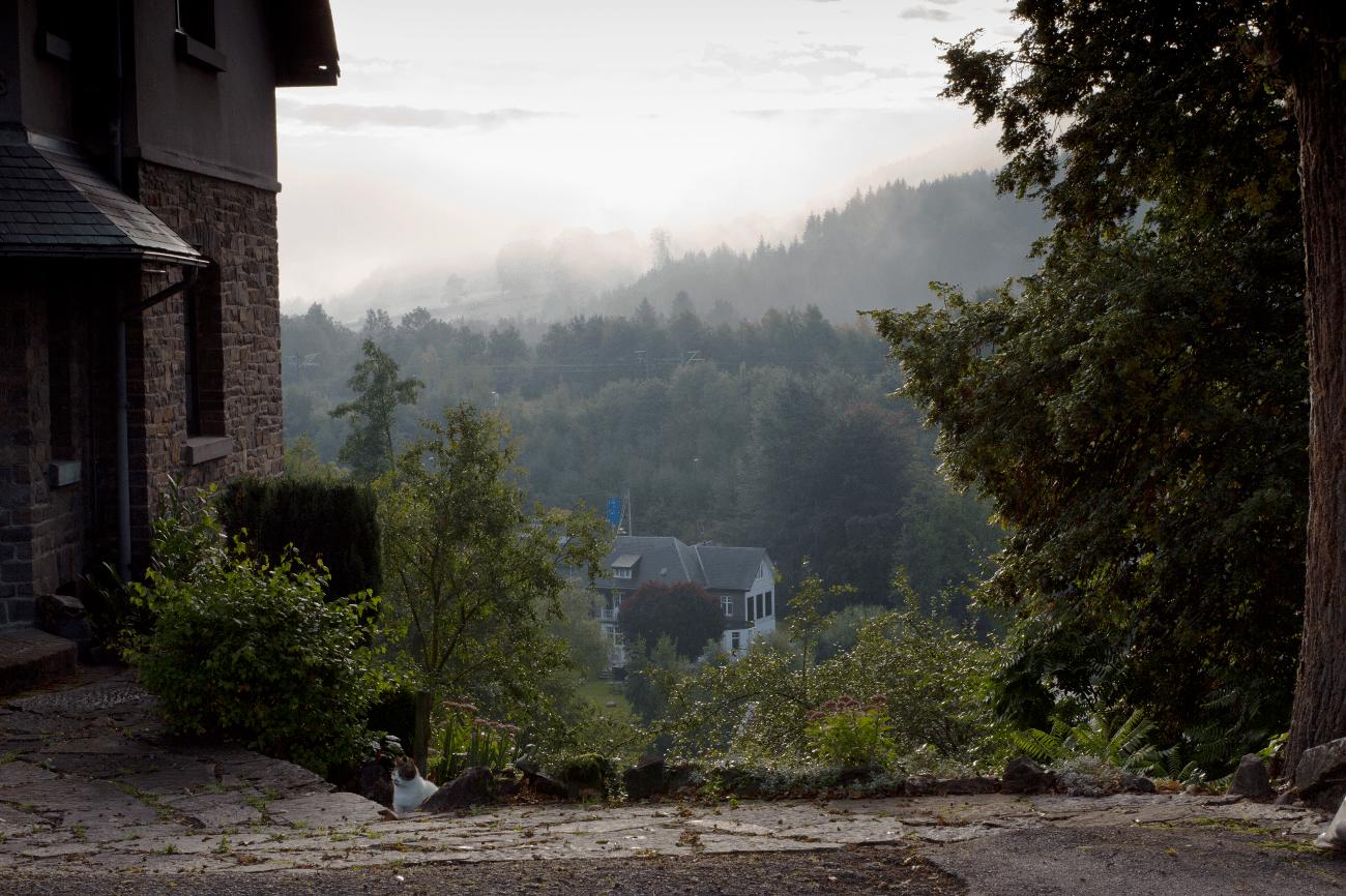 Ochtendmist in de vallei