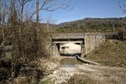 Cow under the bridge