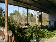 A lot of bay leaves behind the ecocenter