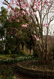 Flower trees in botanical garden
