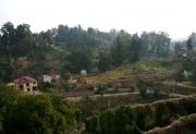Tea plantation terraces