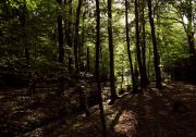 bruggetje in het bos