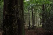 Bos op Landgoed Vosbergen Eelde