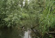 Biesbosch jungle