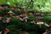 Paddestoelen in het bos bij Roden