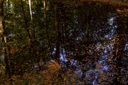 blaadjes in het water