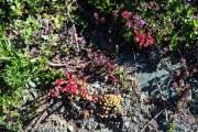 roze bloemetjes op rotsen