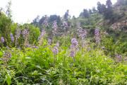 paarse bloemen op de helling