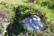 steen met bloemen