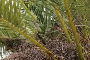 papegaaien in palmboom