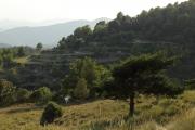 terrassen in alta garrotxa