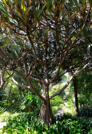 Botanical Garden in Puerto de la Cruz