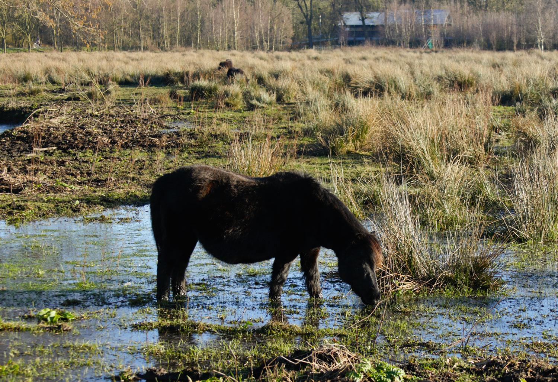 paard in drassig weiland